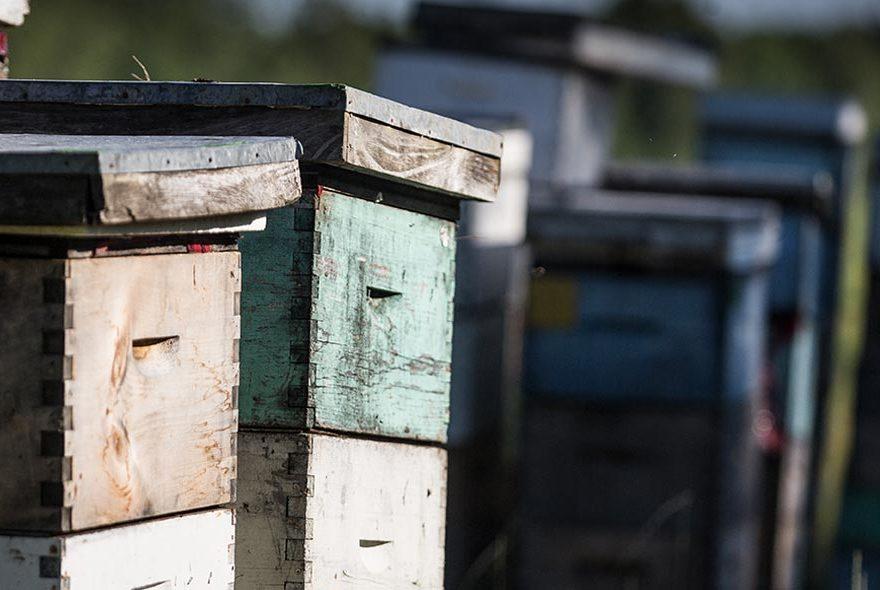 Organisation physique de la ruche