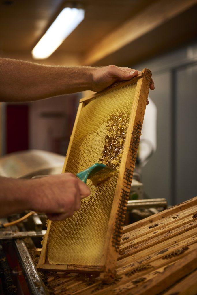 extraction de miel, grattage des cadres au peigne